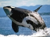 animal_wallpaper_010