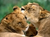 animal_wallpaper_021