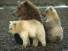 animal_wallpaper_022