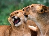 animal_wallpaper_024
