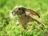 animal_wallpaper_027