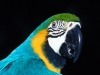 animal_wallpaper_029