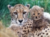 animal_wallpaper_058
