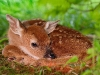 animal_wallpaper_060