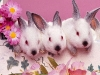 animal_wallpaper_066
