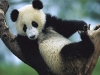 animal_wallpaper_073