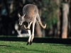 animal_wallpaper_079