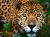 animal_wallpaper_081