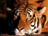 animal_wallpaper_083