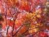 autumntrees001