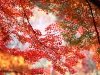autumntrees022