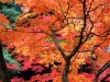 autumntrees027