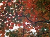 autumntrees031