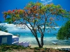 Amazing Beach Wallpaper_140