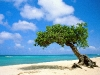 Amazing Beach Wallpaper_183