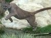 big_cats_wallpaper_011