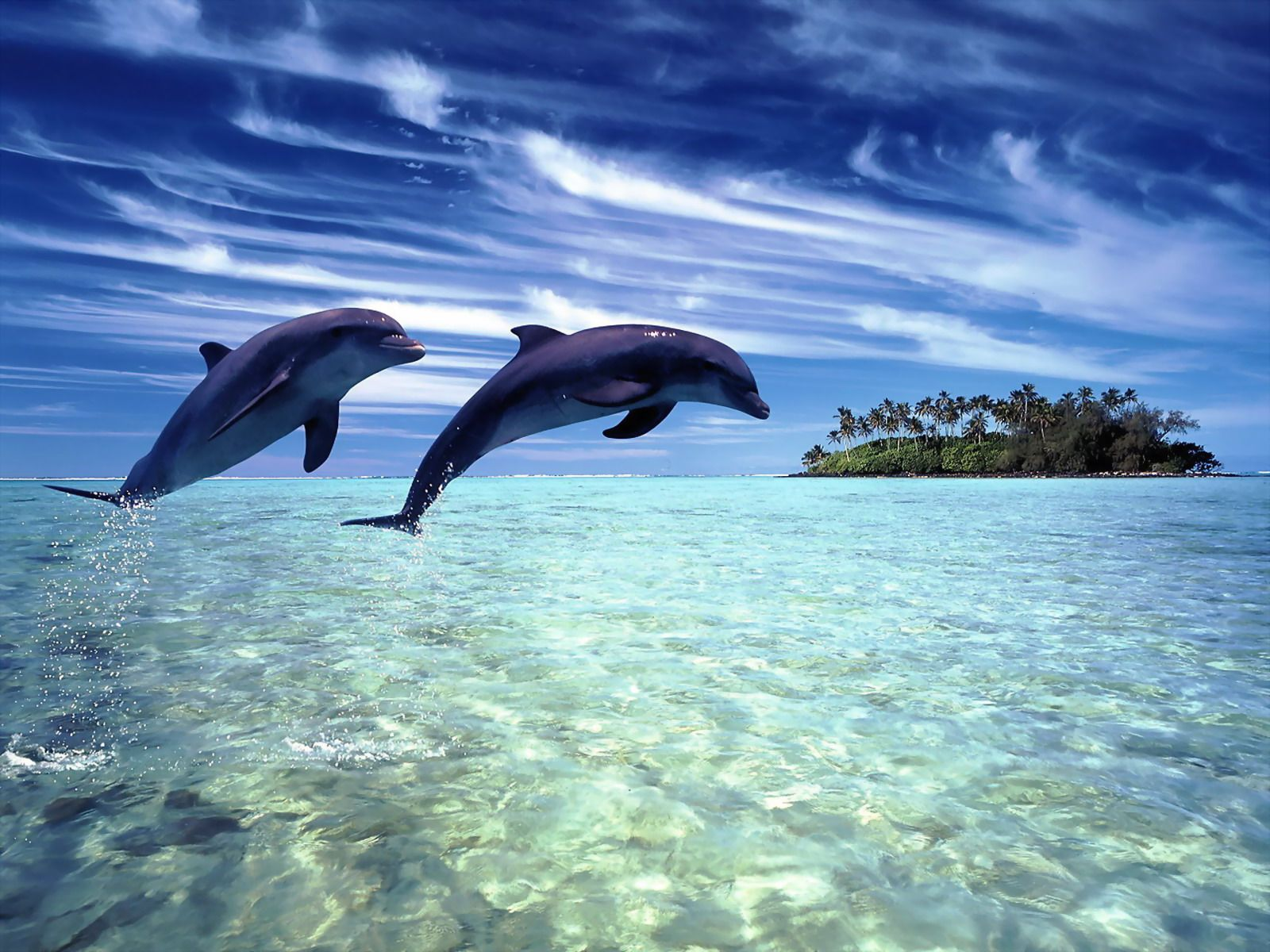 dolphins007
