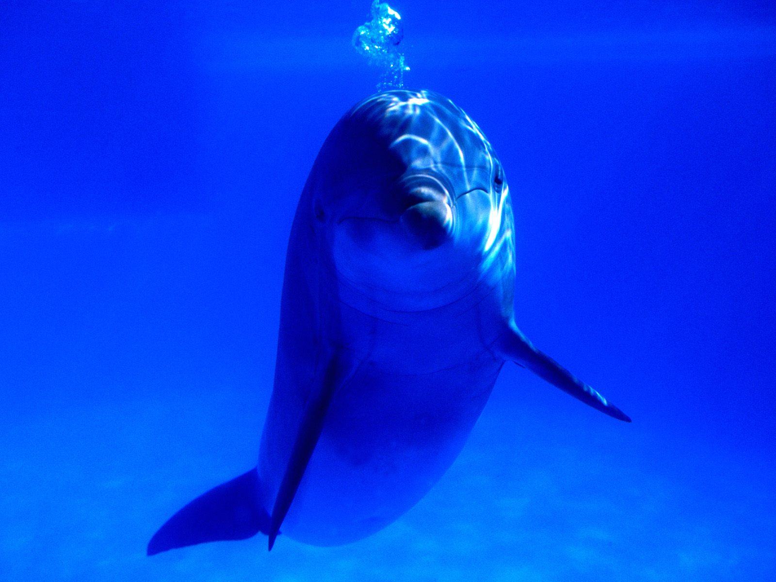 dolphins008