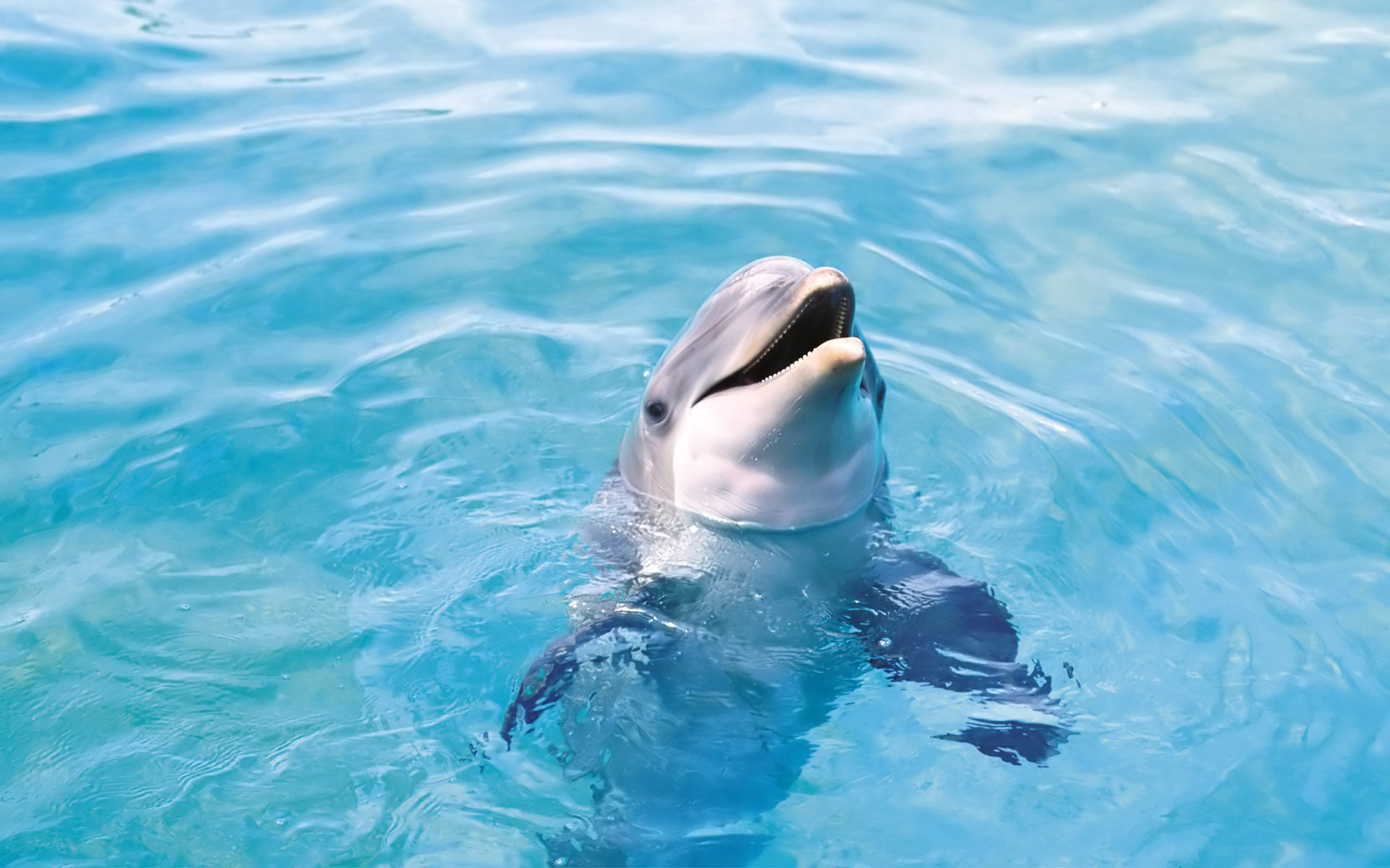 dolphins009