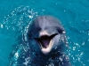 dolphins015