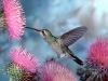 hummingbird_wallpaper_007