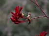 hummingbird_wallpaper_019