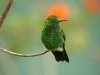 hummingbird_wallpaper_020