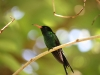 hummingbird_wallpaper_021