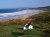 white_park_bay_ireland