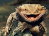 lizard_wallpaper_028
