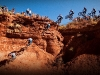 mountainbiking_010
