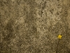 texture_wallpaper_212
