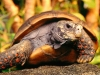 turtle_wallpaper_001