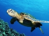turtle_wallpaper_005