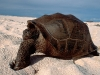 turtle_wallpaper_007
