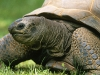 turtle_wallpaper_015