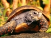 turtle_wallpaper_017